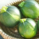 Round Zucchini Summer Squash 25 seeds * Heirloom * Non GMO * *SHIPPING FROM US* CombSH H42