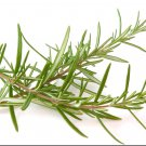 Rosemary Rosemarinus Officinalis 50 seeds * herb * Fragrant * *SHIPPING FROM US* CombSH B86