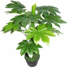 10 + japanese aralia (Fatsia japonica) seeds Ornamental Bonsai shrub Tree I72