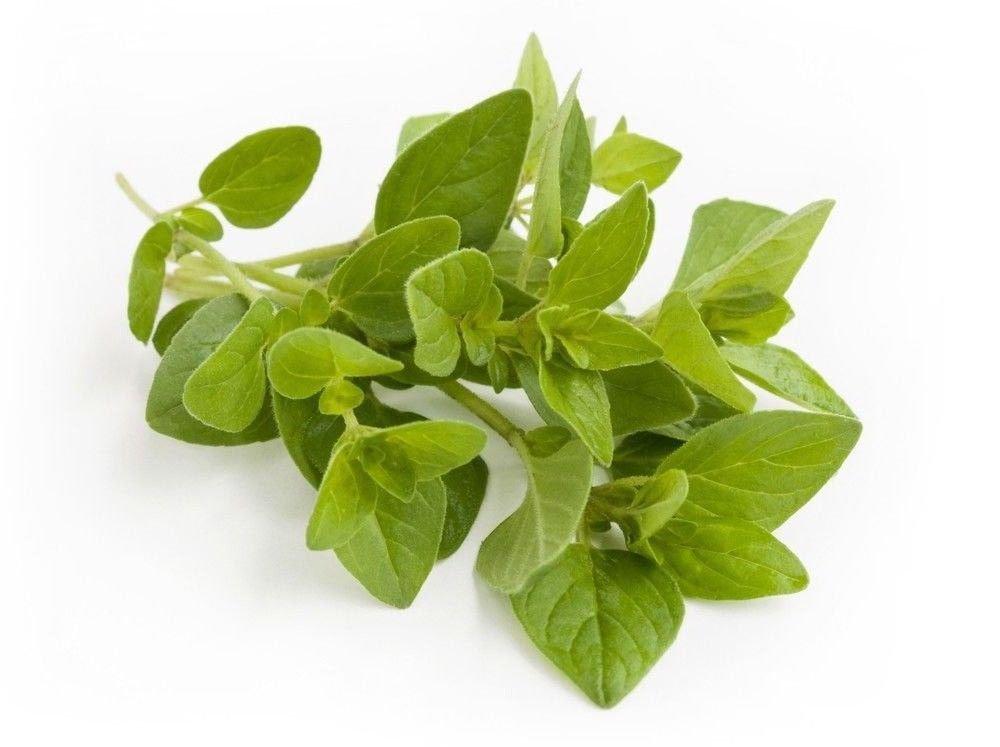 Italian Oregano Origanum Vulgare 500 seeds * herb * ez grow * E45