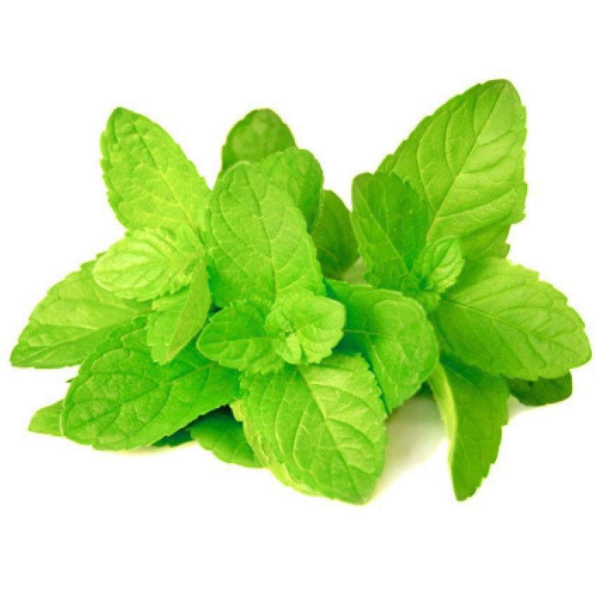 Spearmint Mentha Spicata 250 seeds * Grow your own herb * ez grow * E88