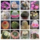 10 Mammillaria mix seeds *Easy grow * Care free * Cactus,succulent *SHIPPING FROM US* CombSH C32