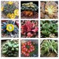 Aloinnopsis Species Mix 10 seeds * Succulent * easy grow * *SHIPPING FROM US* CombSH C72