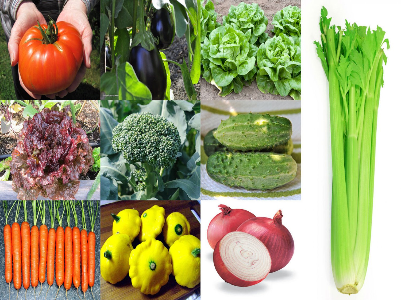 9,100 SEEDS VEGETABLE VARIETIES EMERGENCY SURVIVAL GARDEN PACK  NON-GMO HEIRLOOM