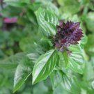 Cinnamon Basil 500 seeds * Grow your own herb * EZ grow * *SHIPPING FROM US* CombSH E33