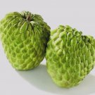 Sugar Apple 5 seeds Annona squamosa * Tropical Fruit * Rare * *SHIPPING FROM US* CombSH H26
