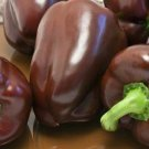 50 Sweet Pepper 'Chocolate Beauty' seeds Heirloom *SHIPPING FROM US* CombSH A17