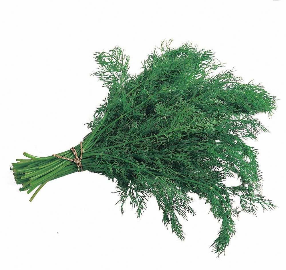 Bouquet Dill 1000+ seeds  Grow your own herb * ez grow *  *SHIPPING FROM US* CombSH J15