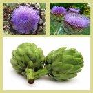Artichoke Green Globe  25 seeds * Cynara cardunculus * Non GMO* EZ grow E71