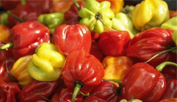 75 Hot Pepper 'Habanero' Capsicum chinense seeds Heirloom  *SHIPPING FROM US* CombSH A41