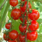 Small Red Cherry Tomato 75 seeds * Non GMO * ez grow * Heirloom *SHIPPING FROM US* CombSH D62