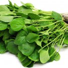 Upland Cress 2000 seeds Barbarea verna * Vegetable * Salad *SHIPPING FROM US* CombSH  D53