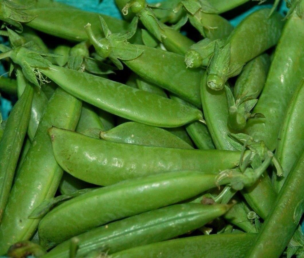 Sugar Ann pea 50 seeds Pisum sativum * Heirloom * Non GMO * *SHIPPING FROM US* CombSH K15