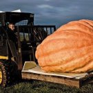 Atlantic Giant pumpkin 5 seeds * World's Largest Pumpkin * Non GMO * *SHIPPING FROM US* CombSH F35
