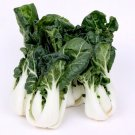 Canton Bok Choy ( Pak Choi ) 2000 seeds *Asian Cuisine * ez grow * *SHIPPING FROM US* CombSH K42