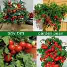 Tiny Tim Tomato 50 seeds Heirloom* Non GMO * ez grow *Sweet Mini *SHIPPING FROM US* CombSH B72