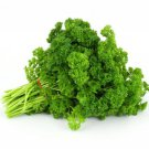 Triple Curled Parsley Petroselinum crispum 1000 seeds * herb * spice E77