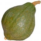 Hubbard True Green Improved Squash 25 seeds  * Heirloom * Non GMO * *SHIPPING FROM US* CombSH J45