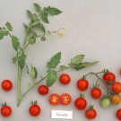 35 Sweetie Tomato seeds heirloom vegetable Non GMO * ez grow * *SHIPPING FROM US* CombSH L34