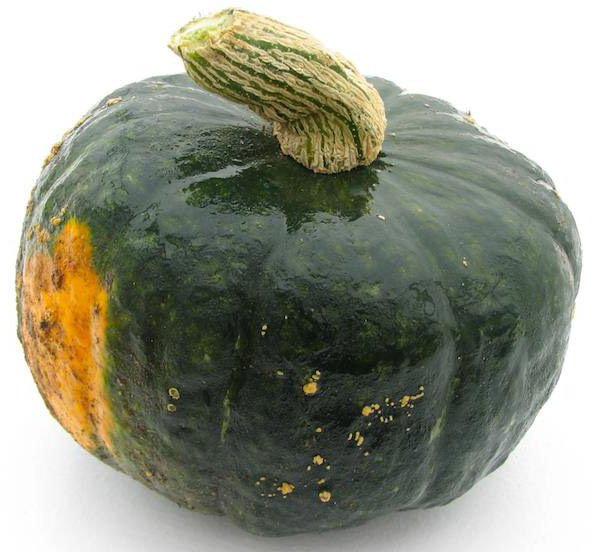 Winter Squash Burgess Buttercup 25 seeds * Heirloom * Non GMO * *SHIPPING FROM US* CombSH K25