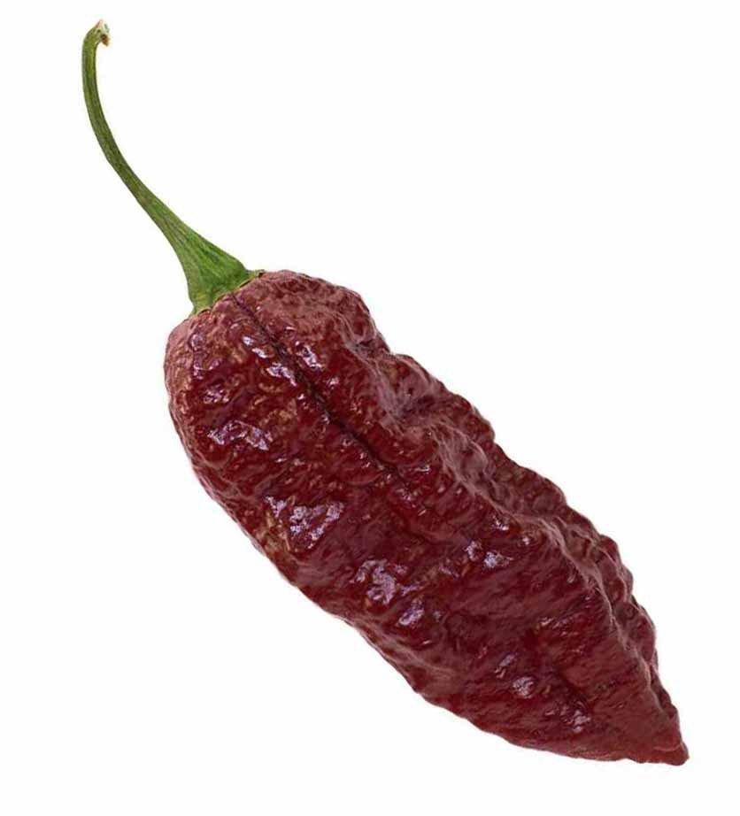 Chocolate Bhutlah pepper 10 seeds *Next world's hottest pepper *SHIPPING FROM US* CombSH B55