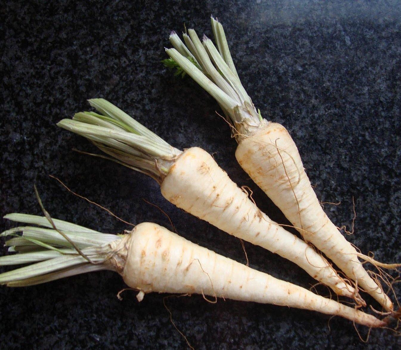 Hamburg Rooted Parsley 1000 seeds * NON GMO * ez grow * I13