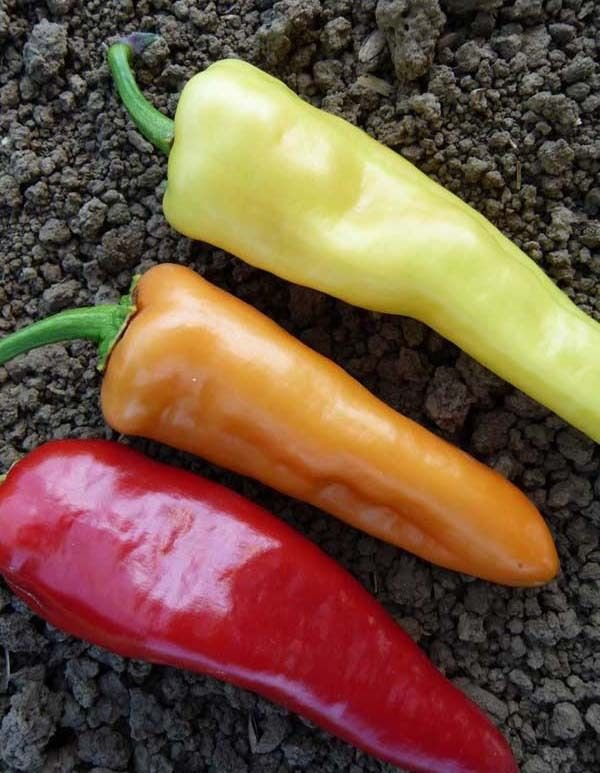300 Sweet Banana Pepper Capsicum Annuum seeds Heirloom CombSH D32