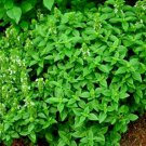 Basil - Spicy Globe 100 seeds * Grow your own herb * ez grow * *SHIPPING FROM US* CombSH B15