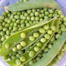 Snow Pea Thomas Lexiton 50 seeds Pisum sativum * Heirloom *Productive * *SHIPPING FROM US* CombSH