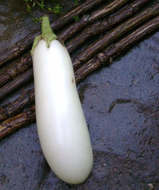 Casper White Eggplant 50 seeds * NON GMO * Early producer * *SHIPPING FROM US* CombSH I22