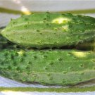 Boston pickling cucumber 100 seeds * Heirloom * Non GMO * *SHIPPING FROM US* CombSH G43