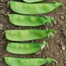Oregon sugar pod snow pea 50 seeds Pisum sativum * Heirloom * Non GMO *  *SHIPPING FROM US* CombSH