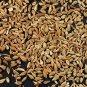 Anise Pimpinella anisum 500 seeds * culinary * herb * ez grow * E55