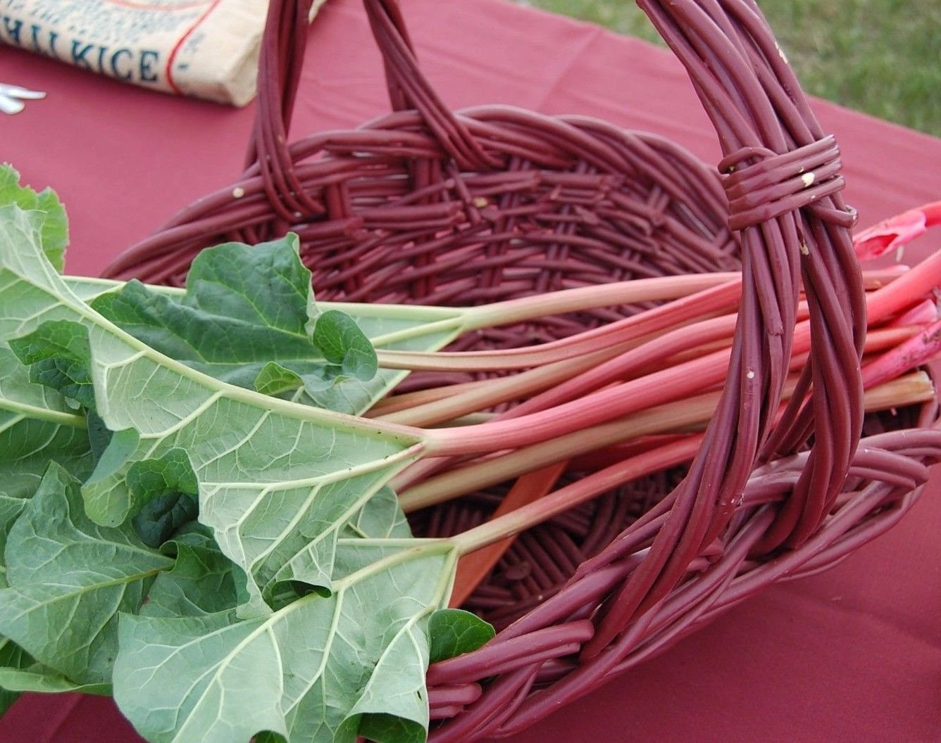 Victoria Rhubarb 100 seeds * Non GMO Vegetable * *SHIPPING FROM US* CombSH B58