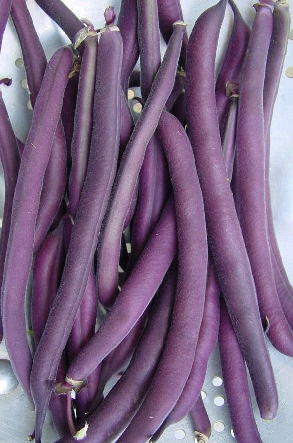 25 Bush bean Royal Burgundy seeds * Heirloom * Non GMO * EZ Grow *SHIPPING FROM US* CombSH G41