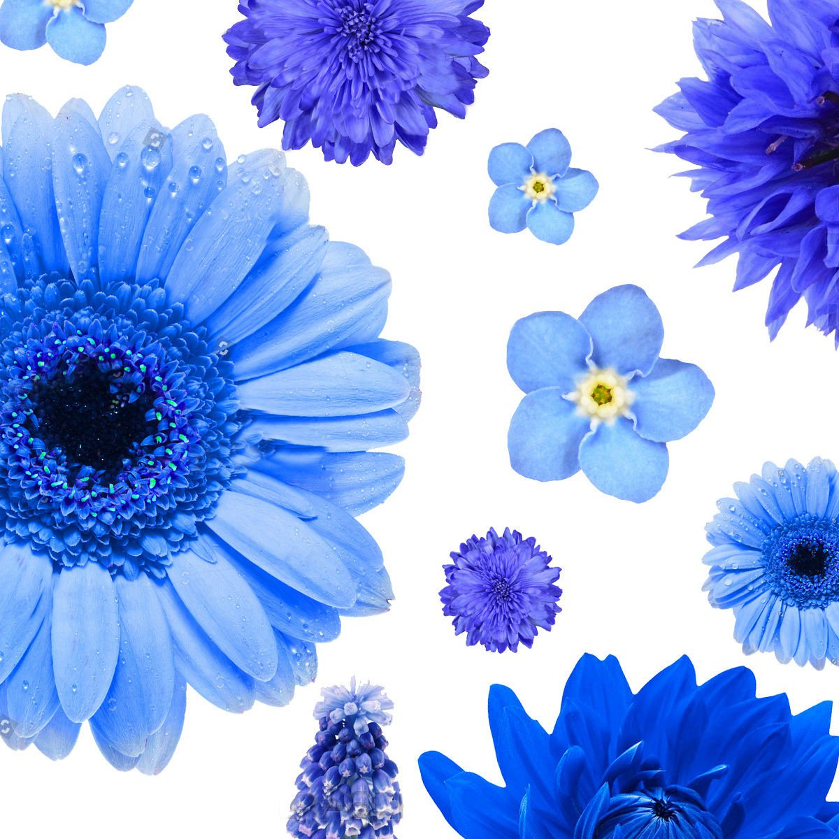 Blue Color Shades Wild flowers Approximate 100 seeds *easy grow* garden *SHIPPING FROM US* CombSH