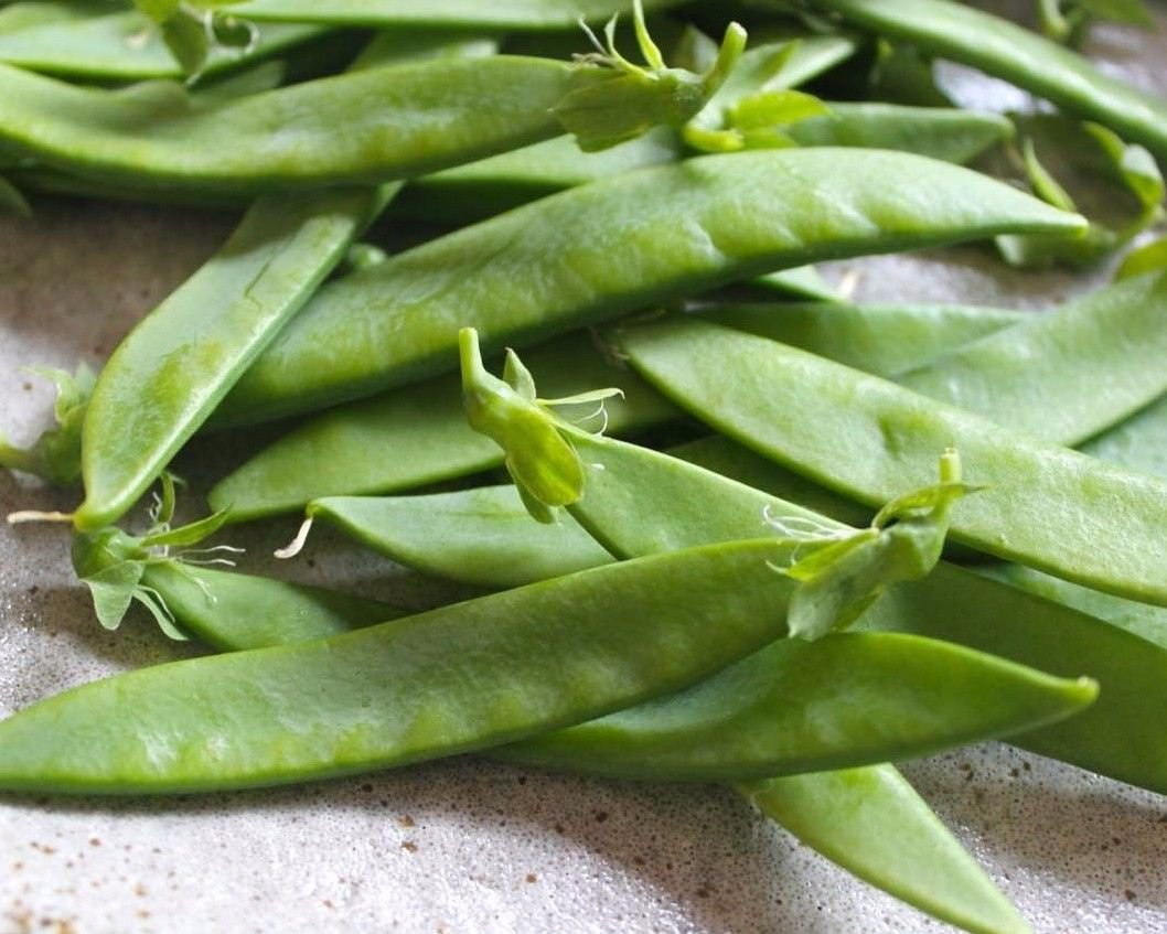 Oregon Giant snow pea 25 seeds Pisum sativum * Heirloom * Non GMO * *SHIPPING FROM US* CombSH J36