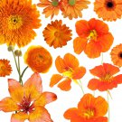Orange Color Shades Wildflowers Approximate 100 seeds *easy grow* garden *SHIPPING FROM US* CombSH
