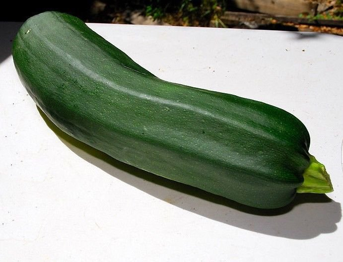 Black Beauty Zucchini Summer Squash 25 seeds * Heirloom *Non GMO* *SHIPPING FROM US* CombSH H11