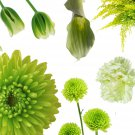Green Color Shades Wild flowers Approximate 100 seeds *easy grow* garden *SHIPPING FROM US* CombSH