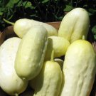 50 + Mini White Cucumber (Cucumis sativus) seeds Organically grown *SHIPPING FROM US* CombSH I42