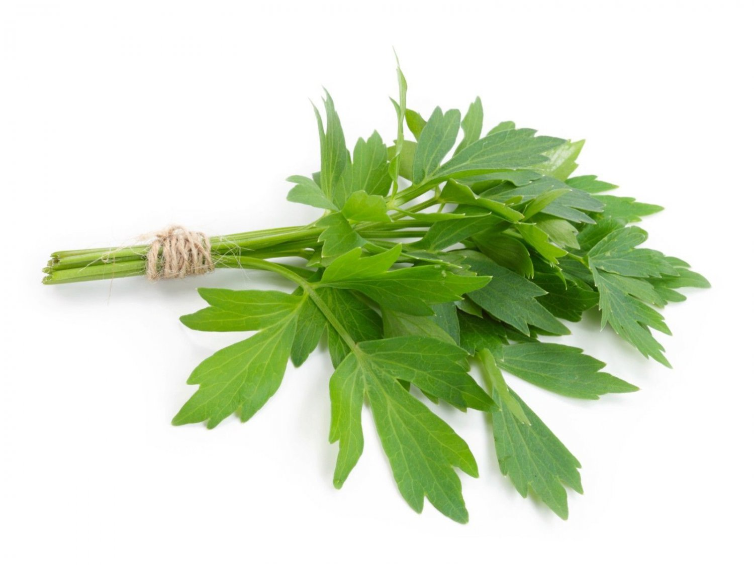Lovage 500 seeds    Levisticum officinale * herb * ez grow  *SHIPPING FROM US* CombSH E61