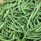Bush bean Blue lake 274- (25 seeds) * Heirloom * Non GMO * *SHIPPING FROM US* CombSH K26