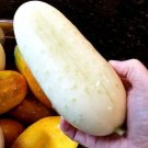 White Wonder Cucumber 50 seeds * Non GMO * *SHIPPING FROM US* CombSH E13