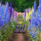 1000 Larkspur seeds  Giant Imperial Mix  Delphinium Consolida CombSH A16