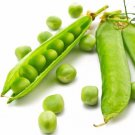 Green Arrow snow pea 50 seeds Pisum sativum * Heirloom * Non GMO * *SHIPPING FROM US* CombSH J46