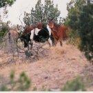 horses 1 8 x 10  framed