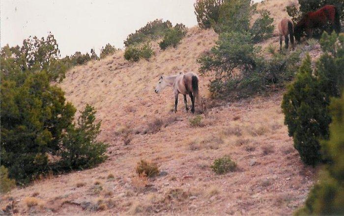 horses 3   unframed