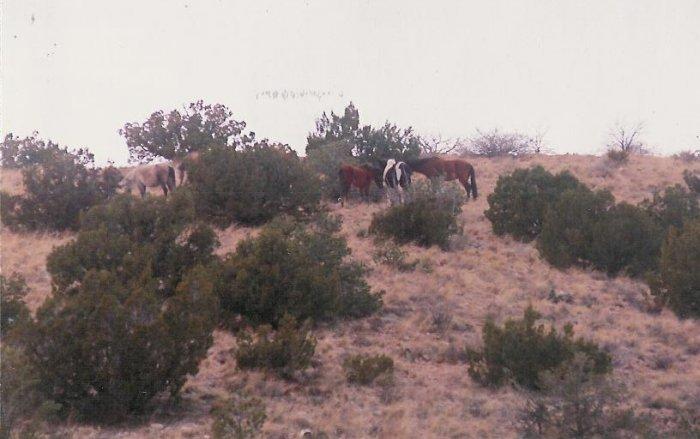 horses 5 10 x 13 framed