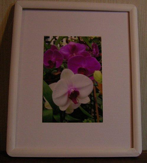 White Wood Framed Photo
